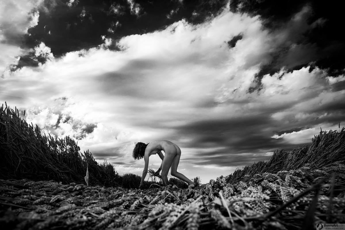 Naked Girl Harvesting Wheat Outdoors