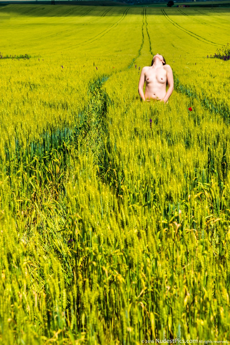 The Topless Energy of the Green Crops Field